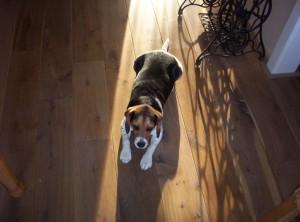 Vloerverwarming parket; verhoging comfort voor mens en huisdier