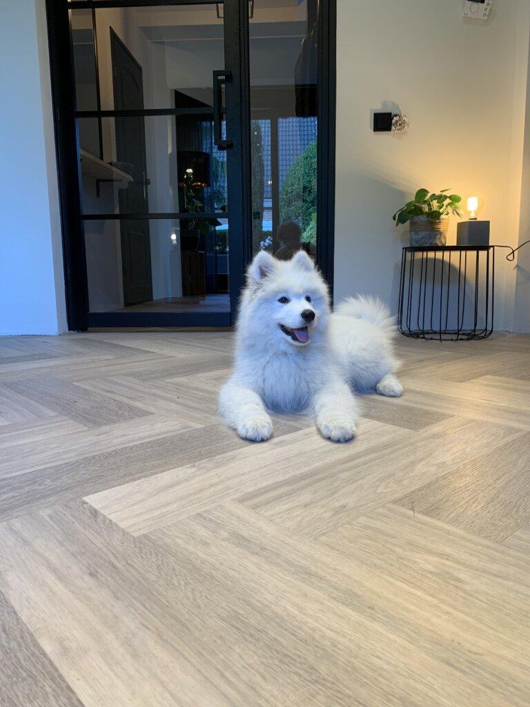 Maja's vloeren en huisdieren