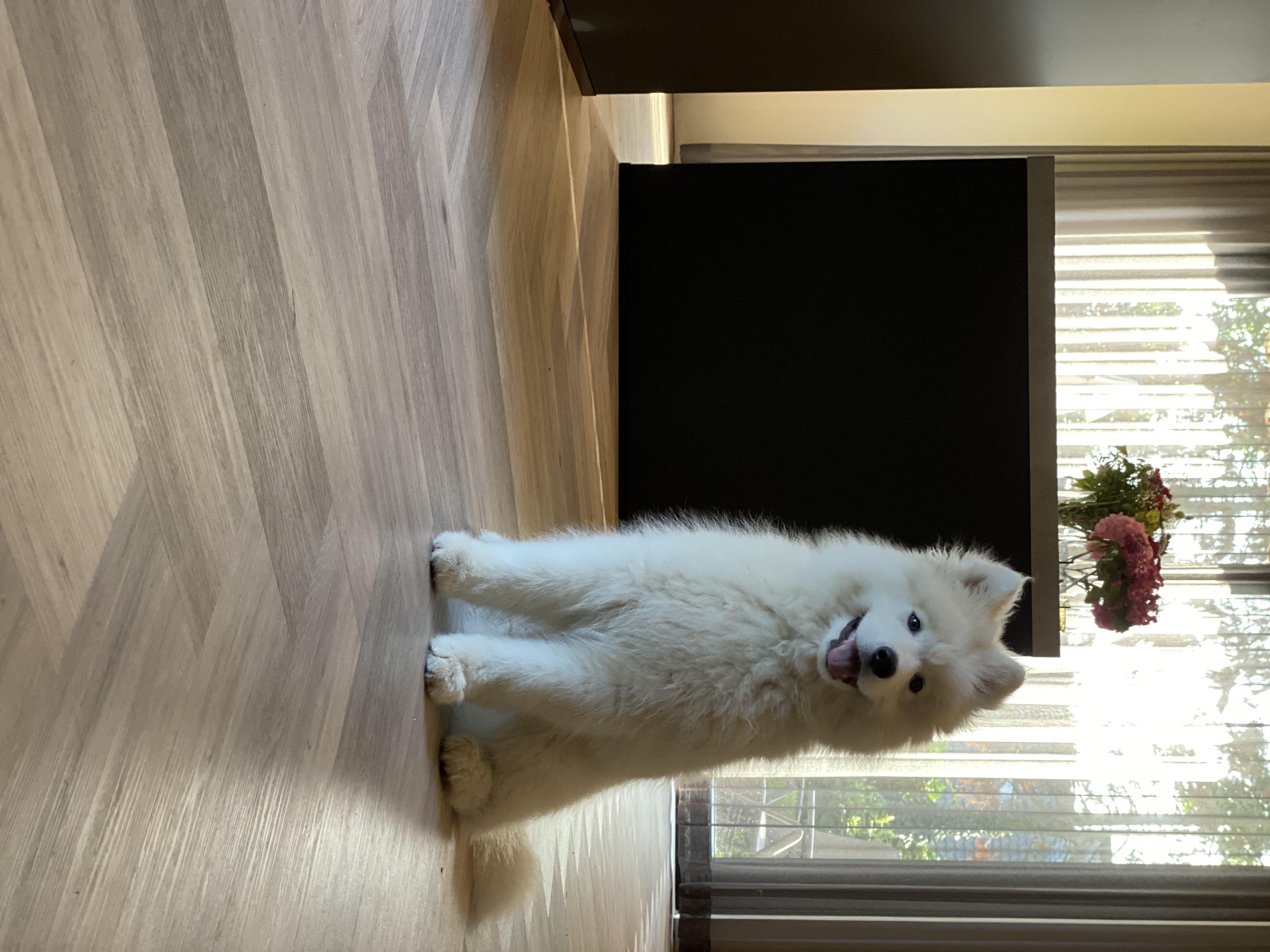 Maja's vloeren i.c.m. huisdieren