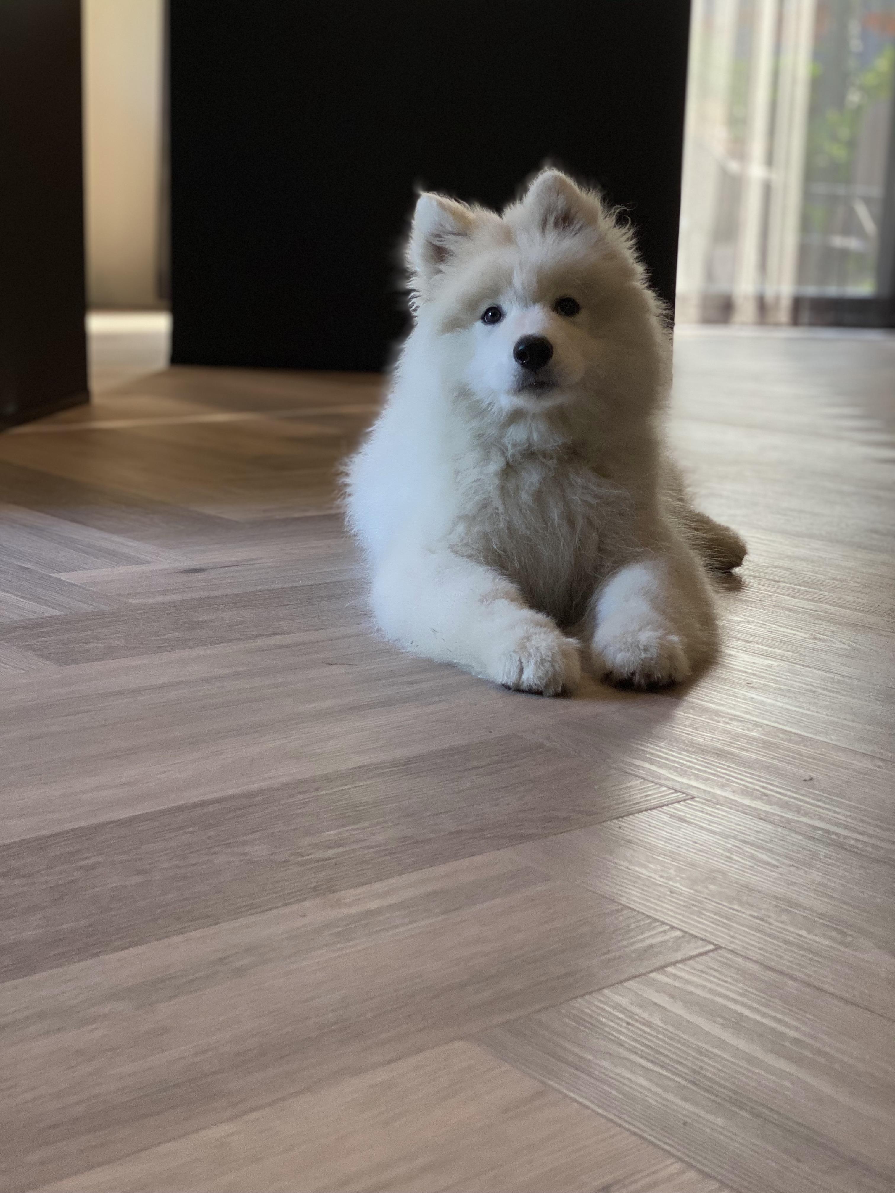 houten vloer icm huisdieren